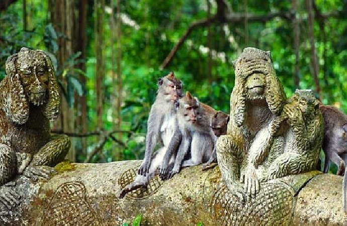 Sacred Monkey Forest Sanctuary