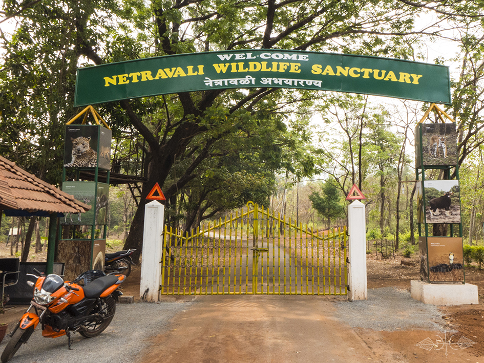 Netravali-Wildlife-Sanctuary